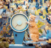 Γάτα που στέκεται στις κλίμακες Στοκ φωτογραφία με δικαίωμα ελεύθερης χρήσης