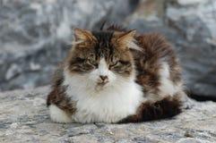 Γάτα που στηρίζεται σε έναν βράχο στοκ φωτογραφίες