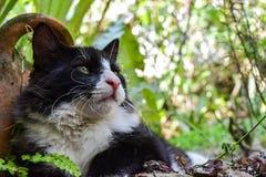 Γάτα που στηρίζεται στον κήπο και που προσέχει τον ουρανό Στοκ φωτογραφία με δικαίωμα ελεύθερης χρήσης