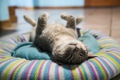 γάτα που τονίζεται Στοκ Φωτογραφία