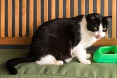 Γάτα που τρώει τα τρόφιμα από ένα κύπελλο Στοκ Εικόνες
