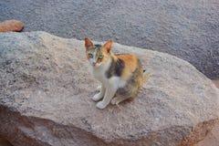 Γάτα που φαίνεται κάτι Στοκ εικόνα με δικαίωμα ελεύθερης χρήσης