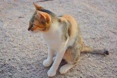 Γάτα που φαίνεται κάτι Στοκ Φωτογραφία