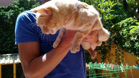γάτα που φοβάται Στοκ εικόνα με δικαίωμα ελεύθερης χρήσης