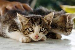 γάτα που φοβούνται λίγα Στοκ φωτογραφία με δικαίωμα ελεύθερης χρήσης