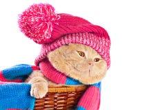 Γάτα που φορά ένα καπέλο και ένα μαντίλι Στοκ φωτογραφία με δικαίωμα ελεύθερης χρήσης