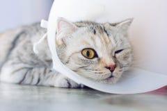 Γάτα που φορά ένα προστατευτικό buster περιλαίμιο στοκ εικόνες
