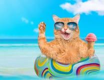 Γάτα που φορά τα γυαλιά ηλίου που χαλαρώνουν στο στρώμα αέρα στη θάλασσα στοκ εικόνες