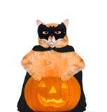 Γάτα που φορά το κοστούμι για αποκριές με μια κολοκύθα Στοκ Εικόνες