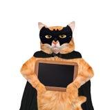 Γάτα που φορά το κοστούμι για αποκριές με τον ξύλινο κενό πίνακα Στοκ Φωτογραφίες