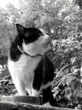 Γάτα που φρουρεί το γεύμα του στοκ εικόνα