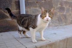 γάτα που χάνεται Στοκ Εικόνα