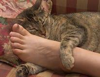 γάτα που χαλαρώνουν Στοκ Εικόνες