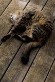 γάτα που χαλαρώνουν Στοκ εικόνα με δικαίωμα ελεύθερης χρήσης