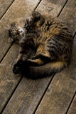 γάτα που χαλαρώνουν Στοκ εικόνες με δικαίωμα ελεύθερης χρήσης
