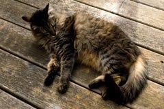 γάτα που χαλαρώνουν Στοκ Εικόνα