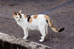 Γάτα που ψάχνει τα τρόφιμα στοκ εικόνες