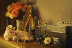 Γάτα πολυτέλειας Στοκ Φωτογραφία