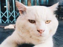 Γάτα προσώπου Στοκ εικόνες με δικαίωμα ελεύθερης χρήσης
