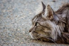 Γάτα πόλεων στην υποκριτική ανάπαυση στο σκυρόδεμα στοκ φωτογραφία