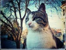 Γάτα πόλεων Στοκ Εικόνα