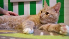 Γάτα πλήρες p2 Στοκ Εικόνες