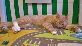 Γάτα πλήρες p1 Στοκ εικόνες με δικαίωμα ελεύθερης χρήσης