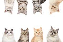 Γάτα-πλαίσιο Στοκ φωτογραφία με δικαίωμα ελεύθερης χρήσης