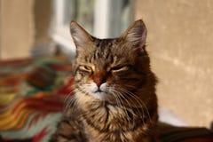 γάτα ριγωτή Στοκ εικόνες με δικαίωμα ελεύθερης χρήσης