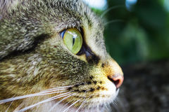 Γάτα ρυγχών στην κινηματογράφηση σε πρώτο πλάνο σχεδιαγράμματος Στοκ φωτογραφία με δικαίωμα ελεύθερης χρήσης