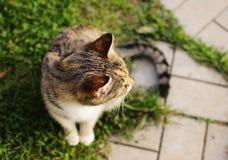 Γάτα σε έναν κήπο Στοκ Εικόνες