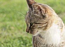 Γάτα σε έναν κήπο Στοκ φωτογραφίες με δικαίωμα ελεύθερης χρήσης