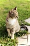 Γάτα σε έναν κήπο Στοκ εικόνες με δικαίωμα ελεύθερης χρήσης