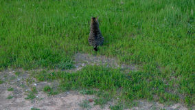 Γάτα σε έναν πράσινο τομέα χλόης στοκ εικόνα με δικαίωμα ελεύθερης χρήσης