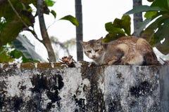 Γάτα σε έναν τοίχο Στοκ Φωτογραφίες