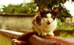 Γάτα σε έναν τοίχο στοκ φωτογραφία