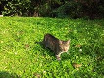 Γάτα σε έναν τομέα στοκ εικόνες με δικαίωμα ελεύθερης χρήσης