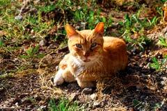Γάτα σε ένα δάσος Στοκ εικόνες με δικαίωμα ελεύθερης χρήσης