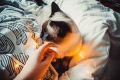 Γάτα σε ένα άσπρο κρεβάτι στοκ εικόνες