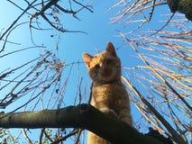 Γάτα σε ένα δέντρο Στοκ Φωτογραφίες