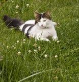 Γάτα σε ένα λιβάδι Στοκ εικόνες με δικαίωμα ελεύθερης χρήσης
