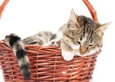 Γάτα σε ένα καλάθι σε ένα άσπρο υπόβαθρο Στοκ Εικόνες
