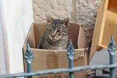 Γάτα σε ένα κουτί από χαρτόνι Στοκ φωτογραφία με δικαίωμα ελεύθερης χρήσης