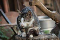 Γάτα σε ένα κούτσουρο Στοκ εικόνα με δικαίωμα ελεύθερης χρήσης