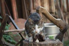 Γάτα σε ένα κούτσουρο Στοκ φωτογραφία με δικαίωμα ελεύθερης χρήσης