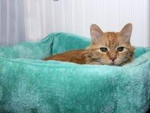 Γάτα σε ένα κρεβάτι γατών στοκ φωτογραφία με δικαίωμα ελεύθερης χρήσης