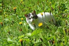 Γάτα σε ένα λιβάδι Στοκ Φωτογραφίες