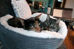 Γάτα σε ένα χνουδωτό κρεβάτι Στοκ Εικόνες