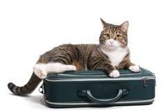 Γάτα σε μια βαλίτσα Στοκ Φωτογραφία