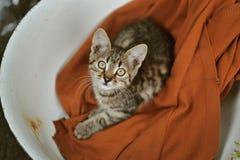 Γάτα σε μια λεκάνη Στοκ φωτογραφία με δικαίωμα ελεύθερης χρήσης